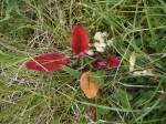Red leaves, possibly sorrel