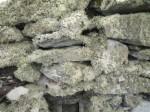 Lichen on wall of ruin