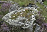 Lichen and stonecrop on a rock