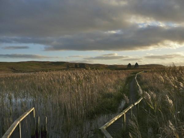 Finlaggan reeds