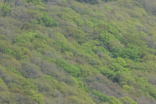 Oak woodlands in mid Wales