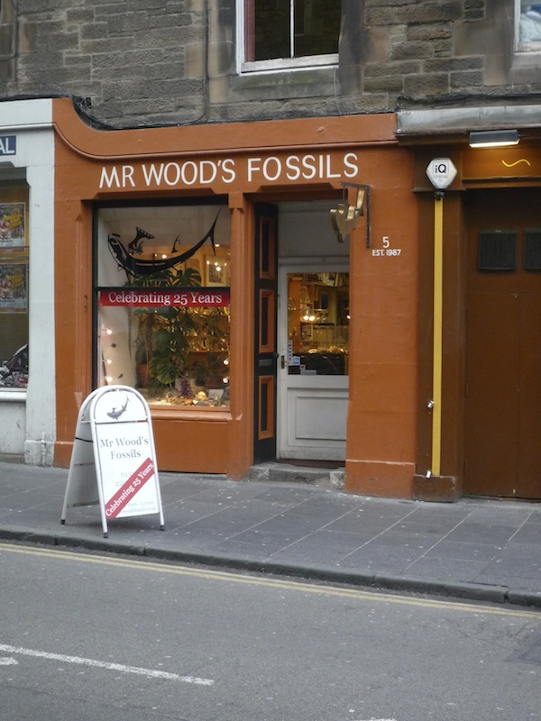 Mr Wood's Fossils