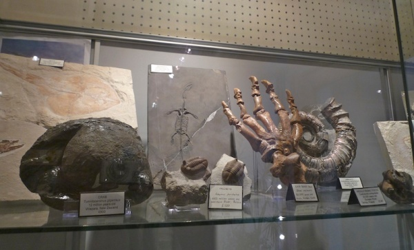 Mr Wood's Fossils (6)