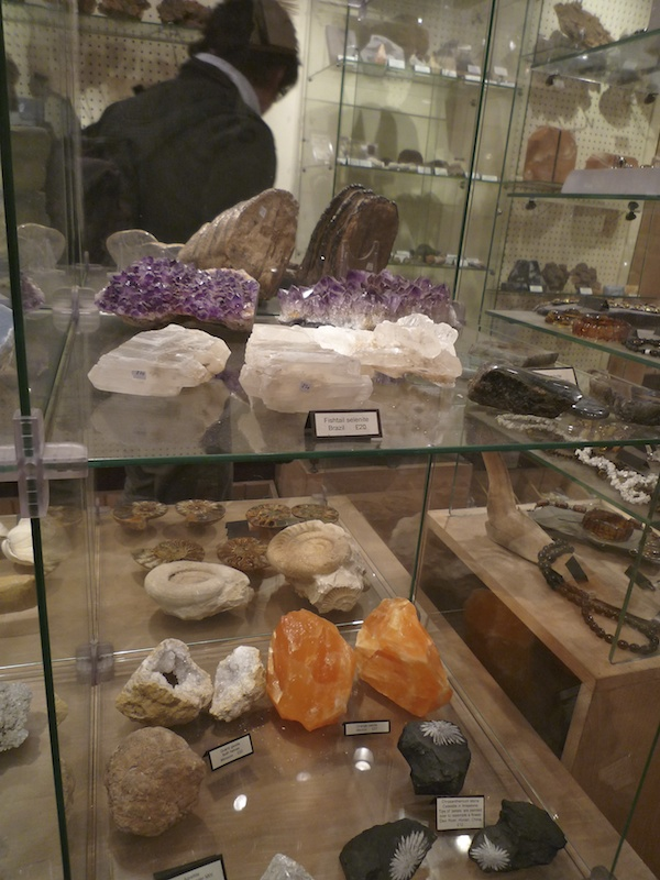 Mr Wood's Fossils (4)