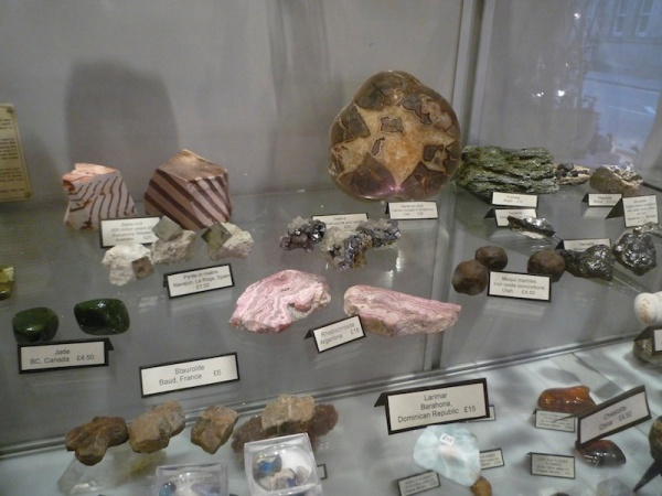 Mr Wood's Fossils (3)