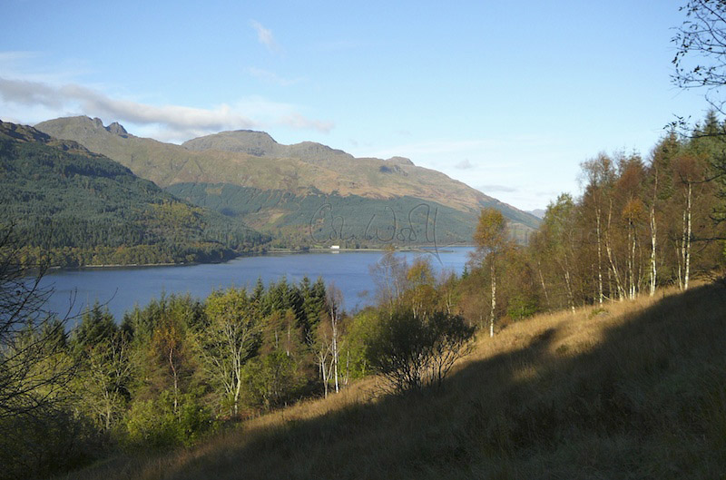 Birch woodland on the banks of Loch Long