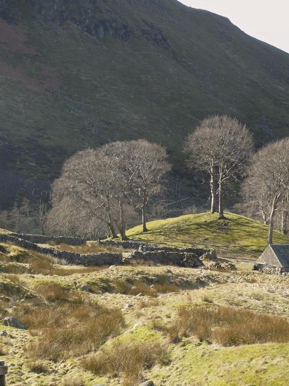 Trees in the Sma' Glen
