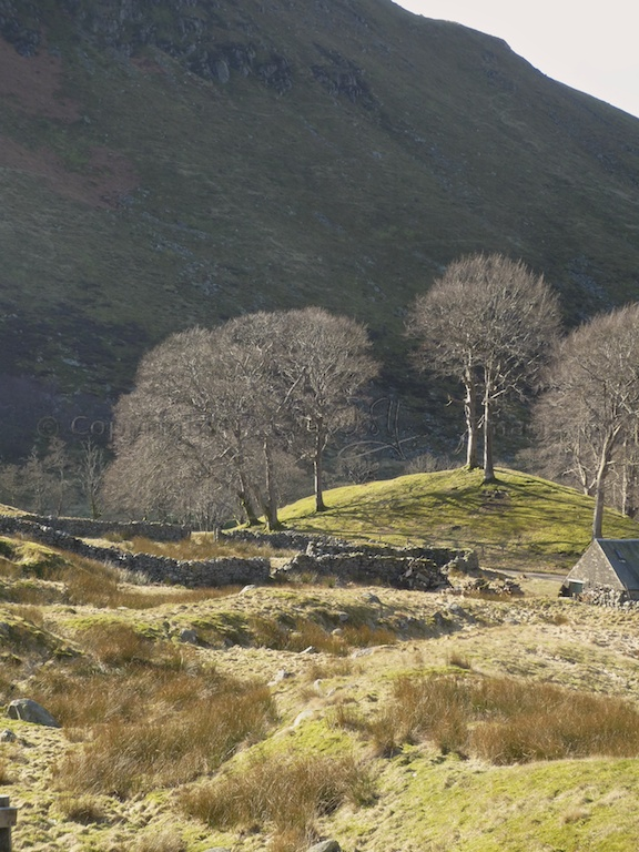 Trees in the Sma' Glen