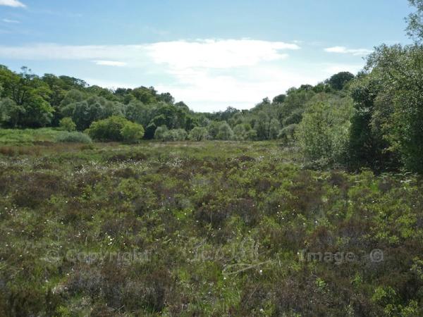 Taynish NNR - marshy fenland