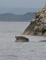 """Grey seal: """"Pick me!"""""""