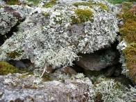 Garvellachs: Lichen running riot