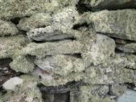 Garvellachs: Lichen-covered wall