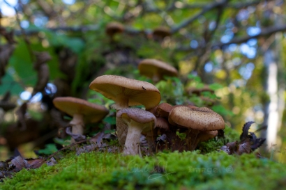 Fungus (19)