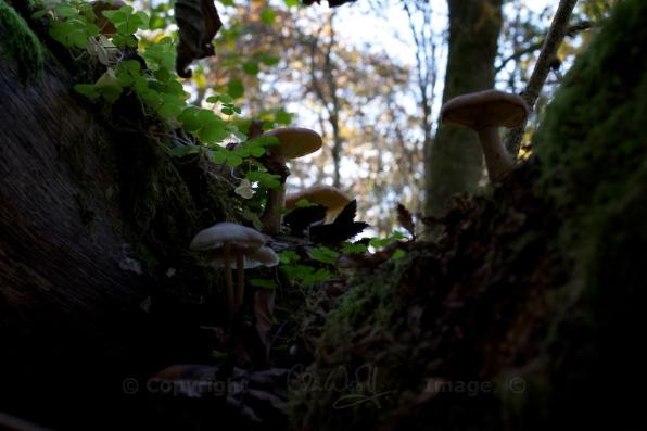 Fungus (17)