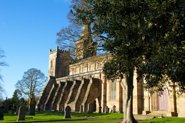 Holly tree outside Dunfermline Abbey Church