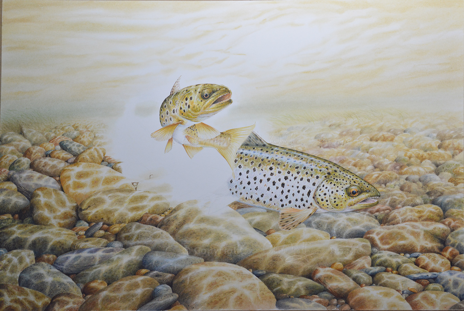Brown Trout underwater, painting by Colin Woolf