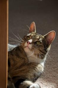 Eternal Sunshine of the Spotless Whiskers