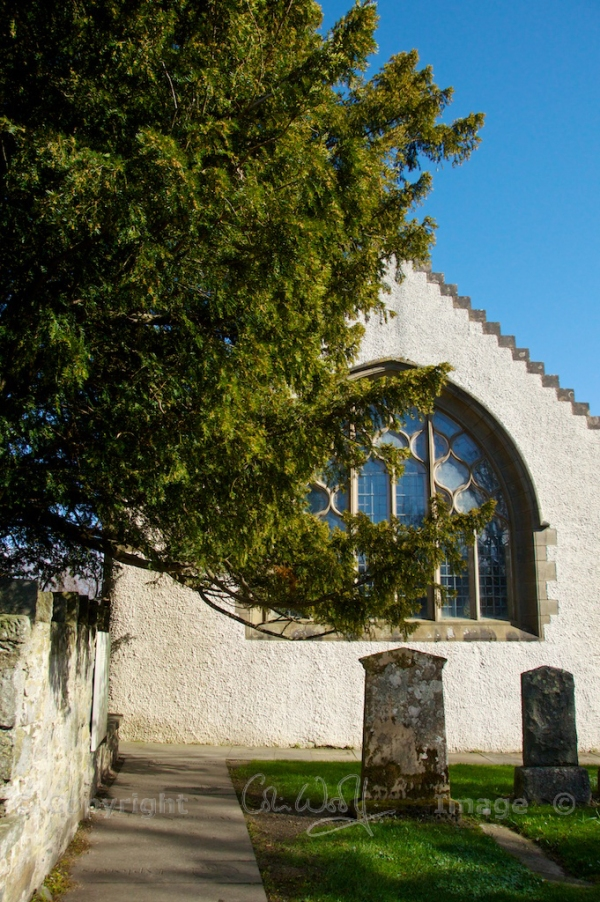 Fortingall Yew 2