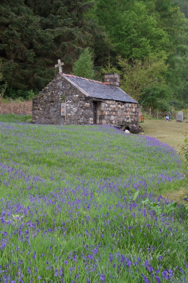 Bluebells in front of an old chapel at Ballachulish