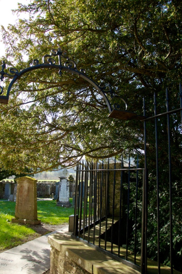 The Fortingall Yew in Fortingall churchyard, Perthshire