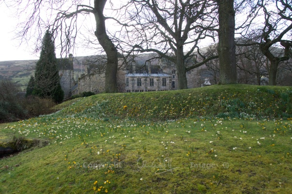 Falkland Crocuses