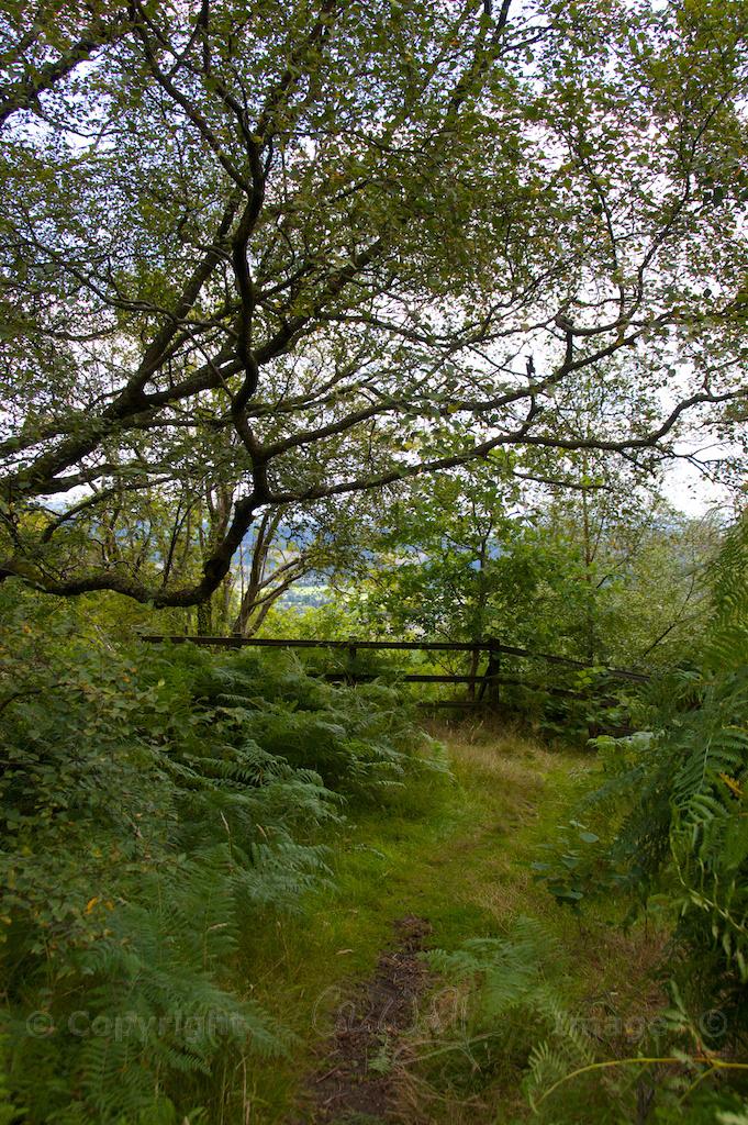 Birch leaves (1)