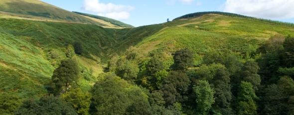Woods crop