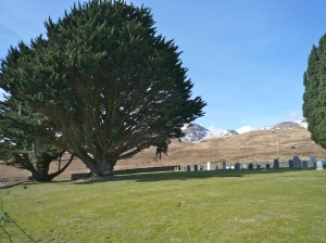 Loch Spelve - cemetery and yew trees