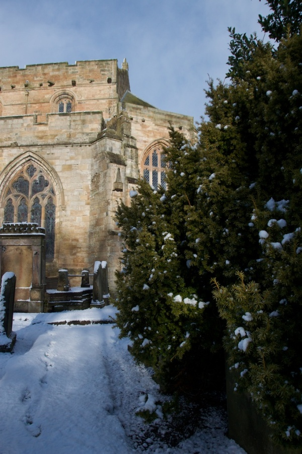 Yew tree in snow outside St Michael's Church, Linlithgow