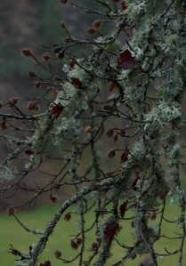 Lichen and beech mast