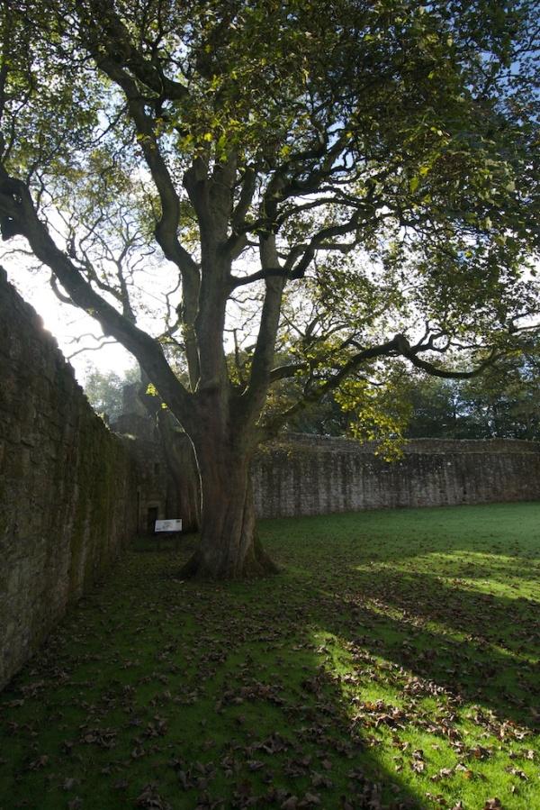 Loch Leven Castle (Colin) 88