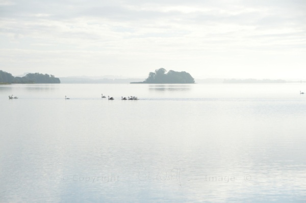 Loch Leven and swans