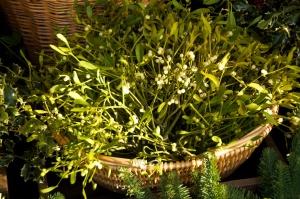 Mistletoe (3)