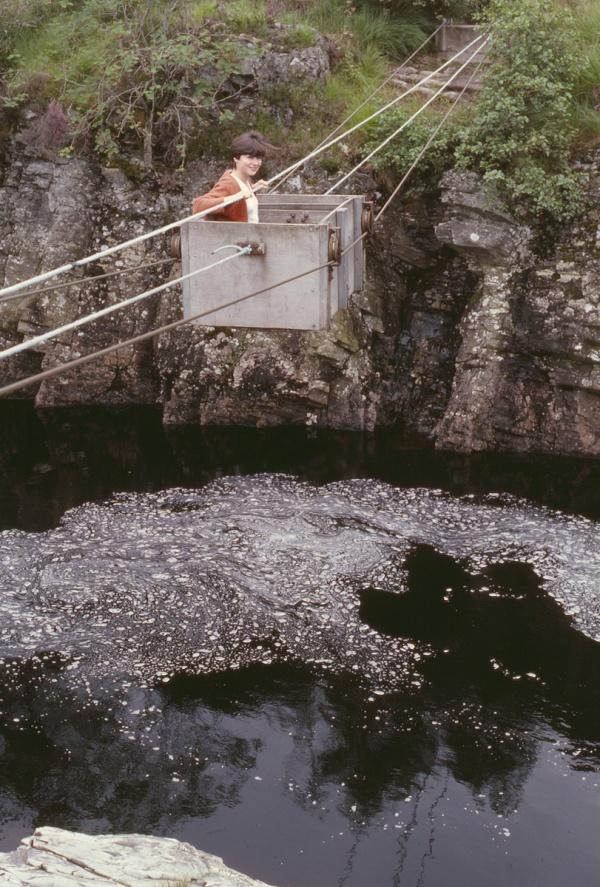 Deer transporter bridge (1)