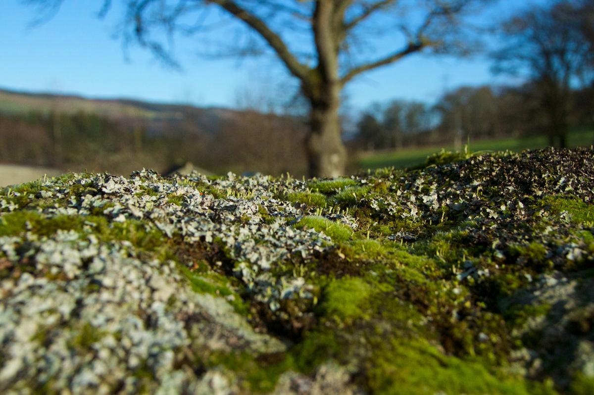 Croft Moraig, stone circle 106