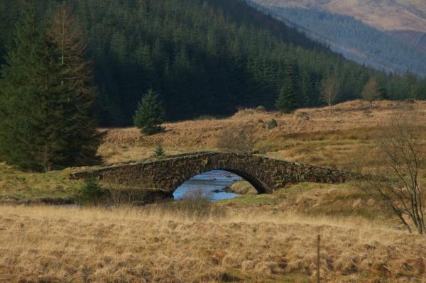 Butter bridge (4)