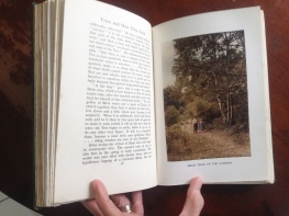 'Trees and How They Grow' book (2)