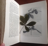 'Trees and How They Grow' book (4)