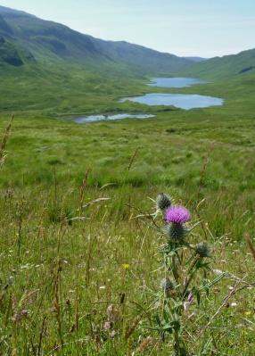 Mull - Loch Sguabain, Glen More