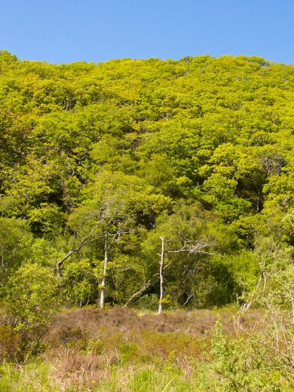 Taynish Woods (2)