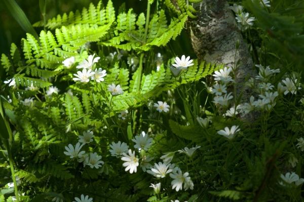 Dunadd, Taynish woods (Colin) 191