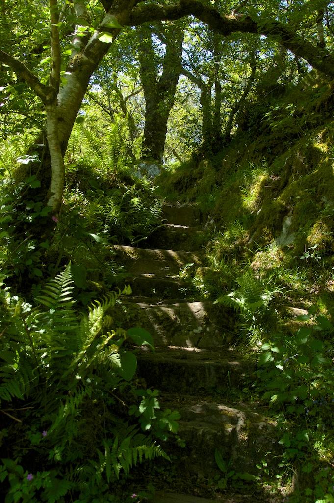 The Ancient Oak Woods Of Taynish The Hazel Tree