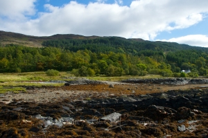 Woods and shoreline south of Ballachulish