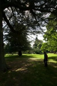 Dryburgh - trees