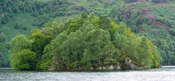 Ellen's Isle Crop