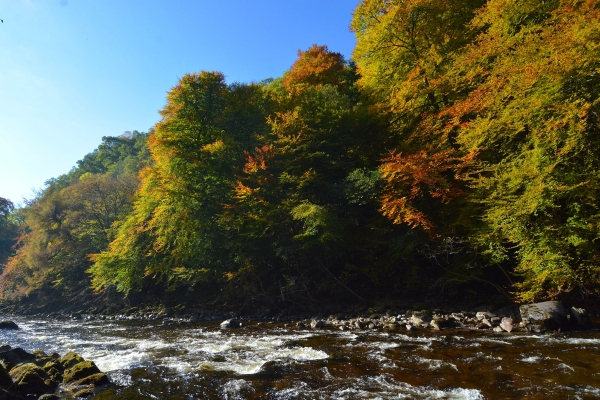 Killiecrankie autumn (1)