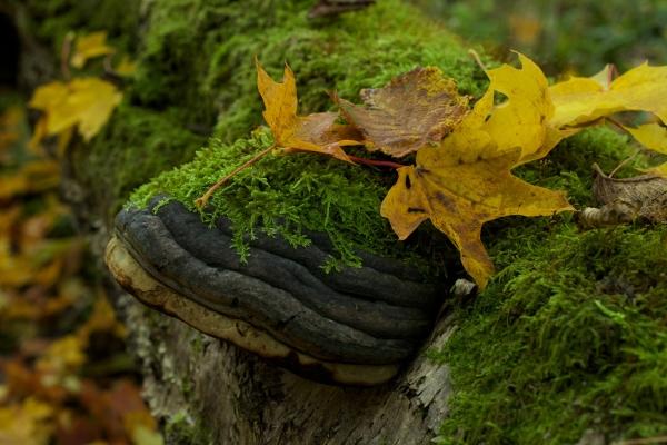 Killiecrankie autumn (36)