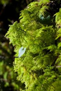 Achnabreck (6) - moss