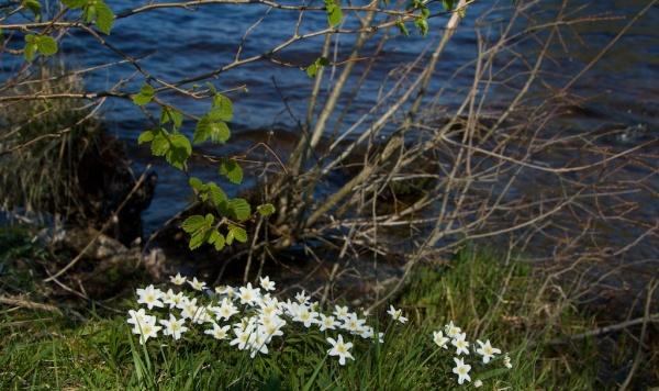 Loch Avich JW 8