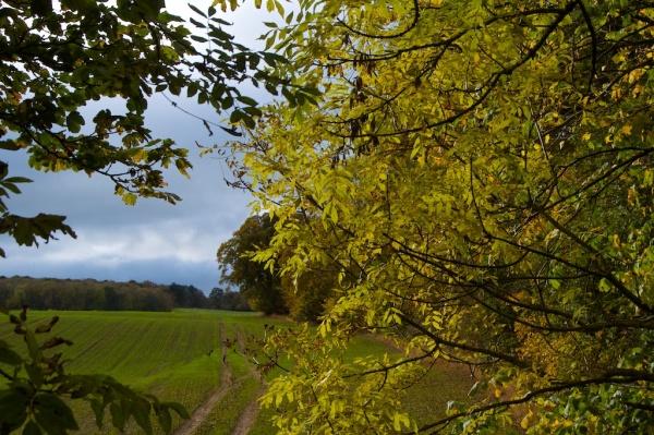 Ash tree in autumn 1